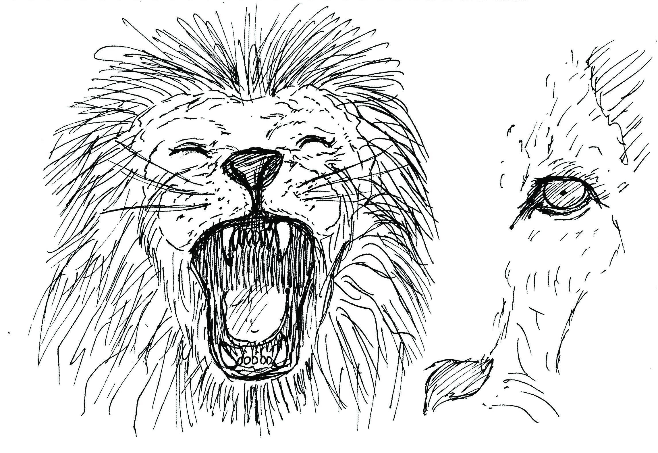 lion-001